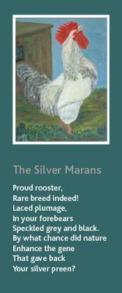 The Silver Marans. Oil painting and poem by Peter Mark Butler